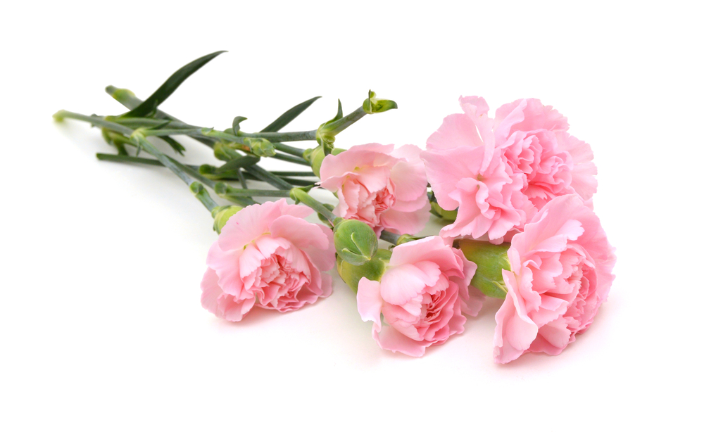10 Most Popular Valentines Day Flowers And Its Flower Meanings
