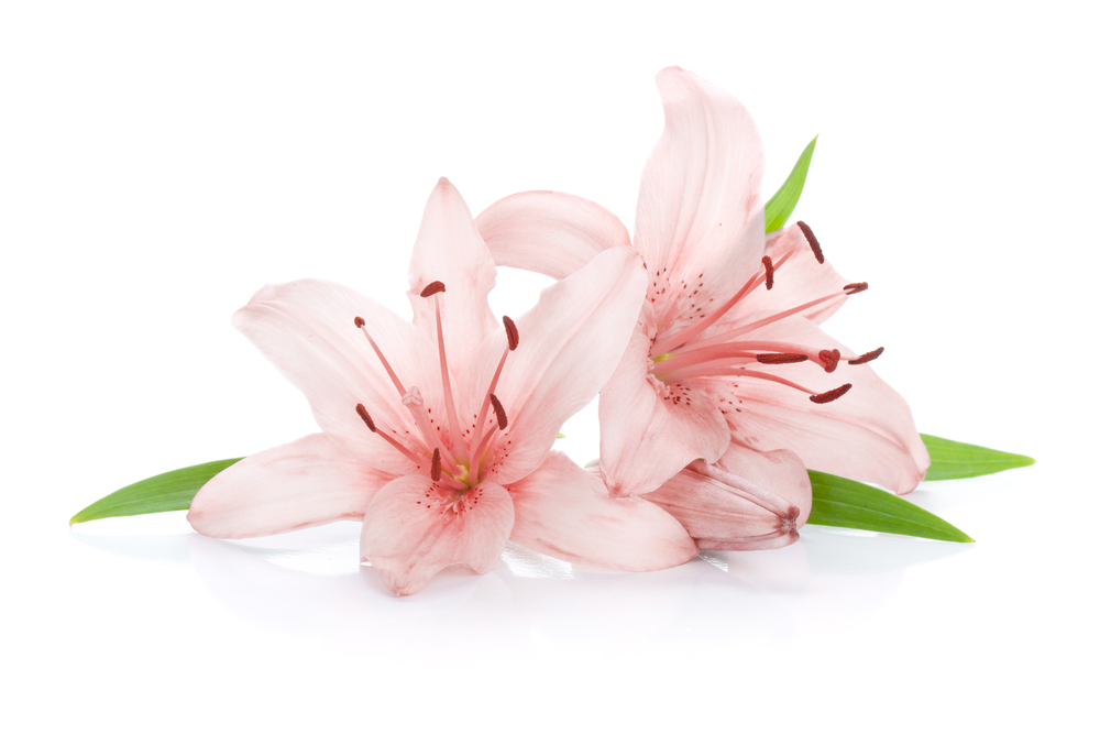#4: The Lily. Flower meaning: Chastity ...