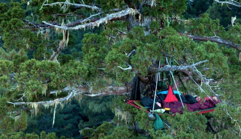 tree-camping